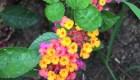 Фото цветов в дневное время суток