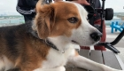 Фото собаки с HDR