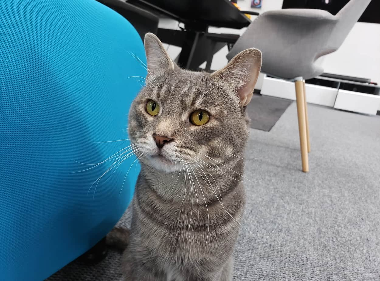 Фото котика с помощью Samsung Note 9