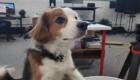 Фото собаки с автофокусом