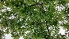 Снимок листвы днем