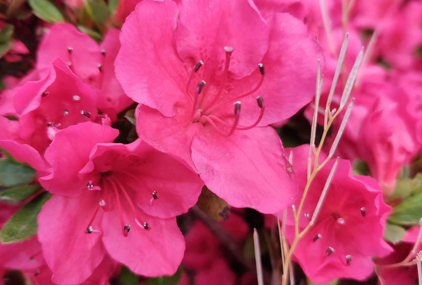 Фото цветка без зума