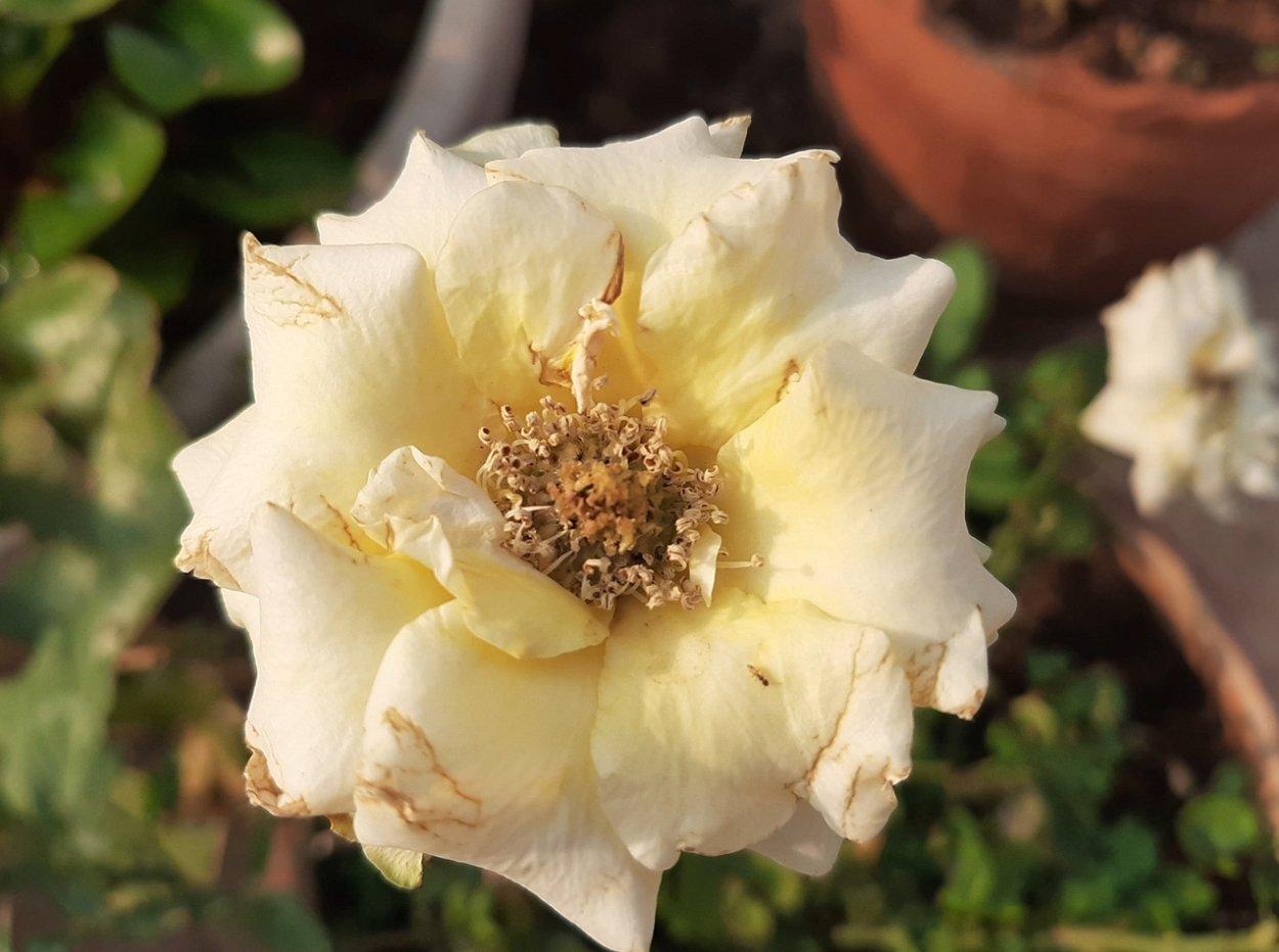 Макросъемка цветка