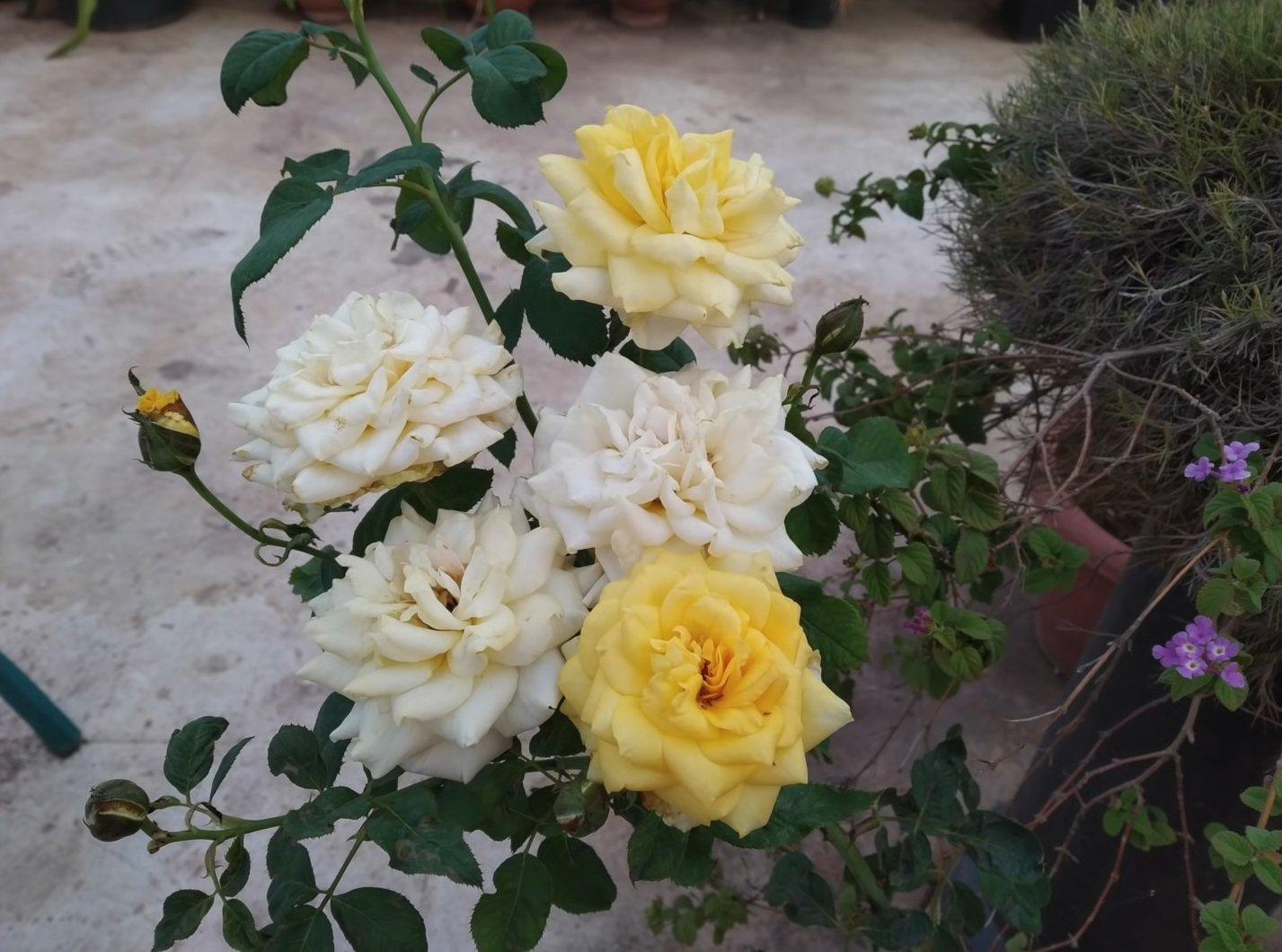 Фотография ярких цветков