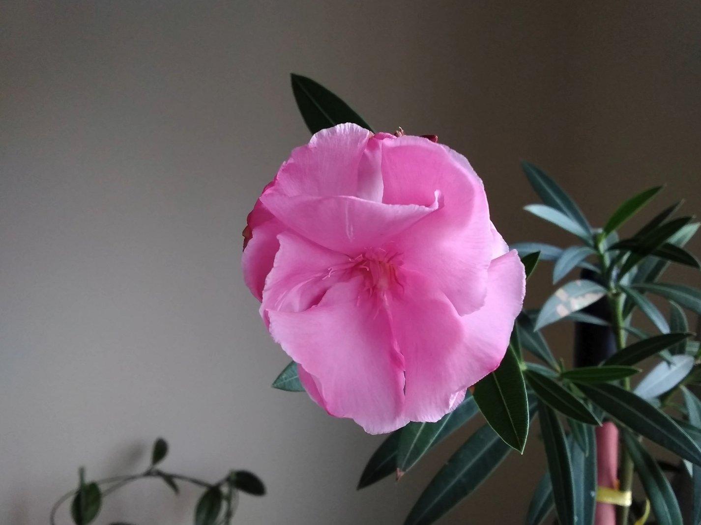 Фотография в помещении цветка